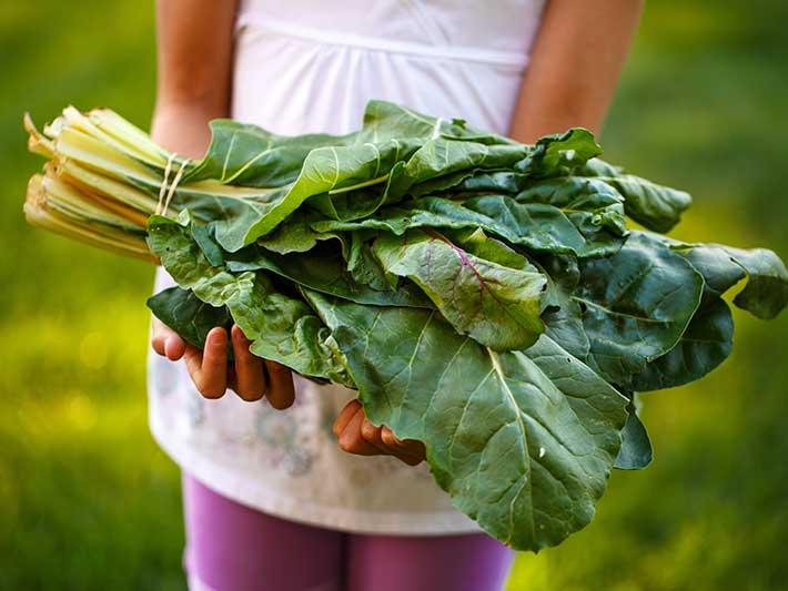 Légumes Bio dans le Cambrésis