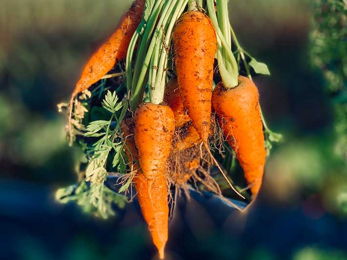 Fruits et légumes laids