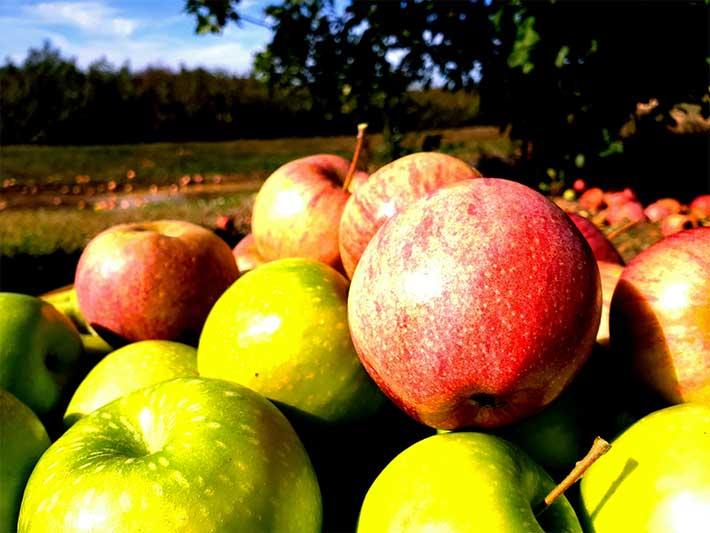 Pommes du Cambrésis