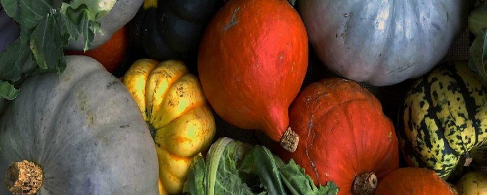 Producteurs locaux et vente à la ferme dans le Cambrésis